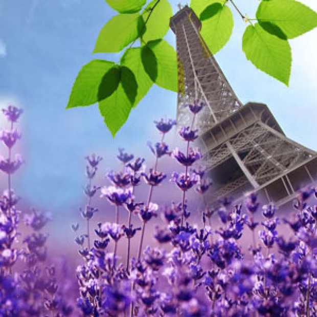French Lavender Fragrance Oil  for making candles, soaps, creams, lotions, tonics and other cosmetics