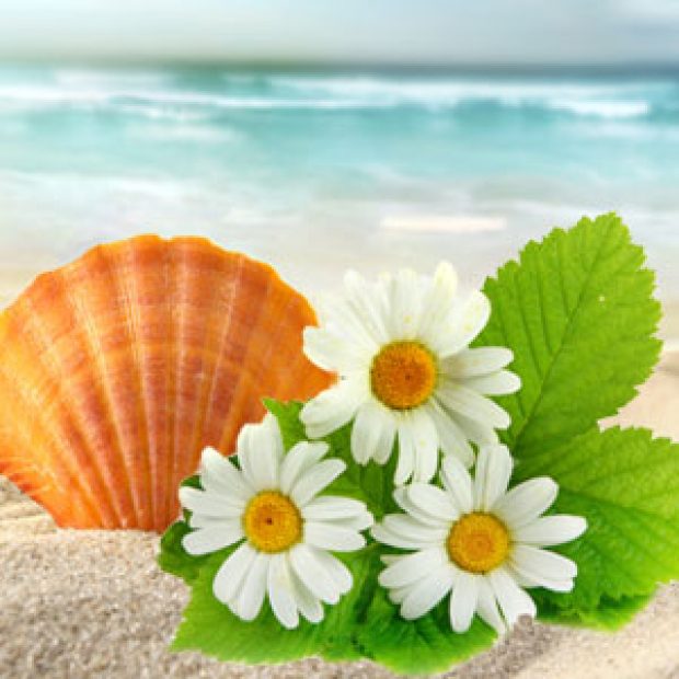 Beach Daisies Fragrance Oil for making candles, soaps, creams, lotions, tonics and other cosmetics