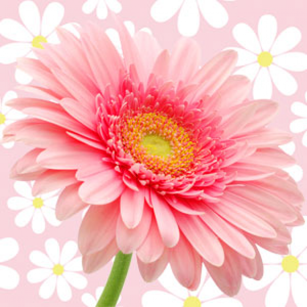 Daisy Type Fragrance Oil for making candles, soaps, creams, lotions, tonics and other cosmetics