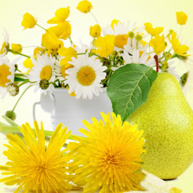 Dandelion Pear Fragrance Oil  for making candles, soaps, creams, lotions, tonics and other cosmetics