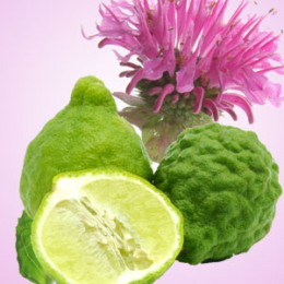 Gingered Bergamot Fragrance Oil