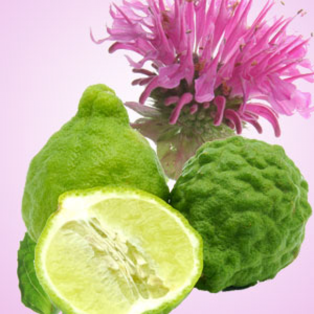 Gingered Bergamot Fragrance Oil for making candles, soaps, creams, lotions, tonics and other cosmetics