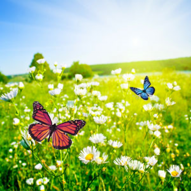 Butterfly Meadows Fragrance Oil  for making candles, soaps, creams, lotions, tonics and other cosmetics