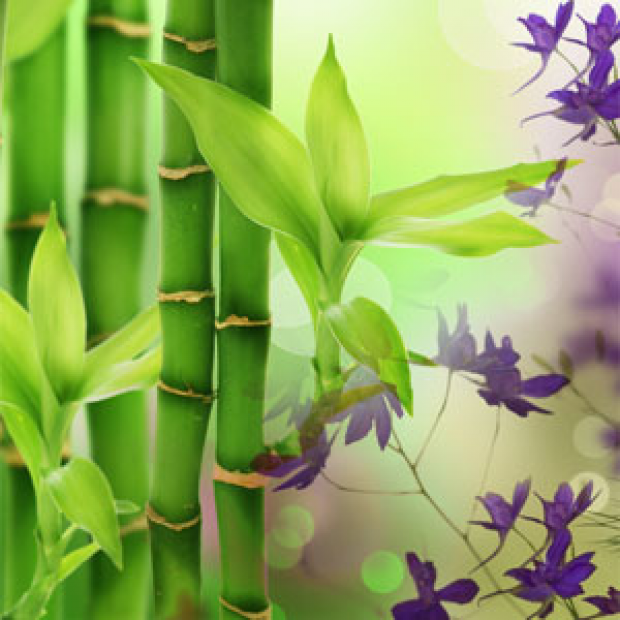 Australian Bamboo Grass Fragrance Oil for making candles, soaps, creams, lotions, tonics and other cosmetics