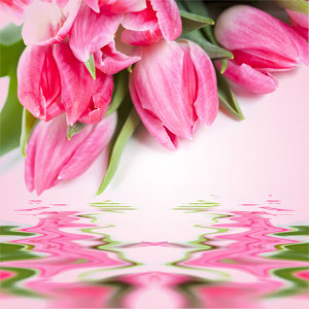Tulip Fragrance Oil  for making candles, soaps, creams, lotions, tonics and other cosmetics