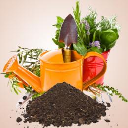 Garden Dirt Fragrance Oil
