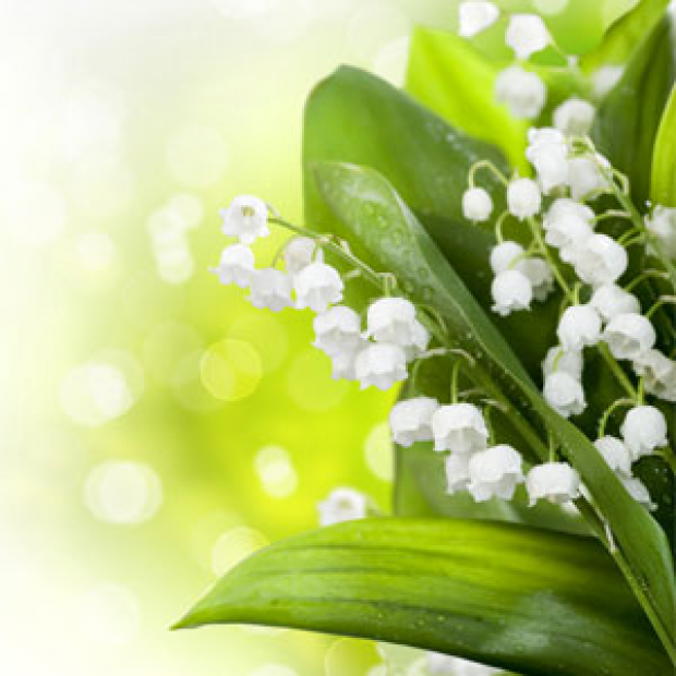 Lily of the Valley Fragrance Oil for making candles, soaps, creams, lotions, tonics and other cosmetics