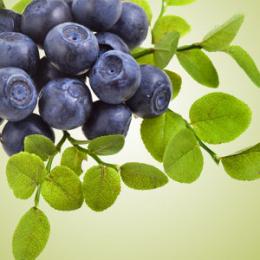 Huckleberry Harvest Fragrance Oil