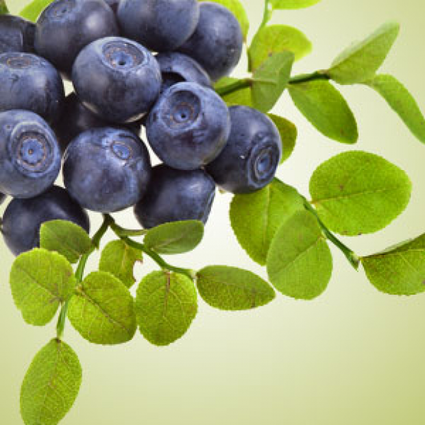 Huckleberry Harvest Fragrance Oil for making candles, soaps, creams, lotions, tonics and other cosmetics