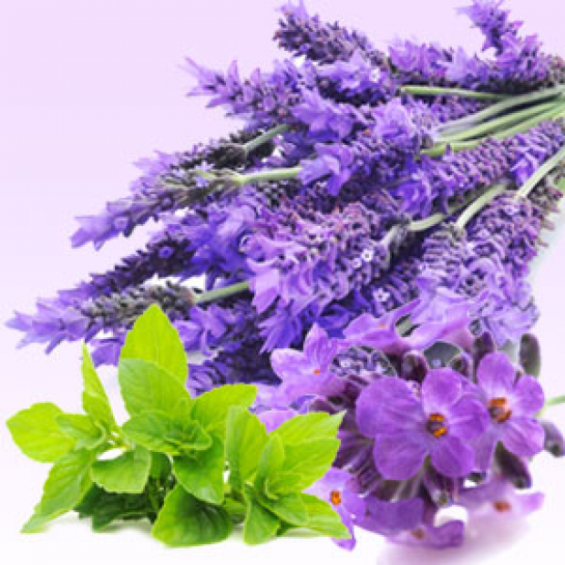 Lavender Mint WOW Fragrance Oil  for making candles, soaps, creams, lotions, tonics and other cosmetics