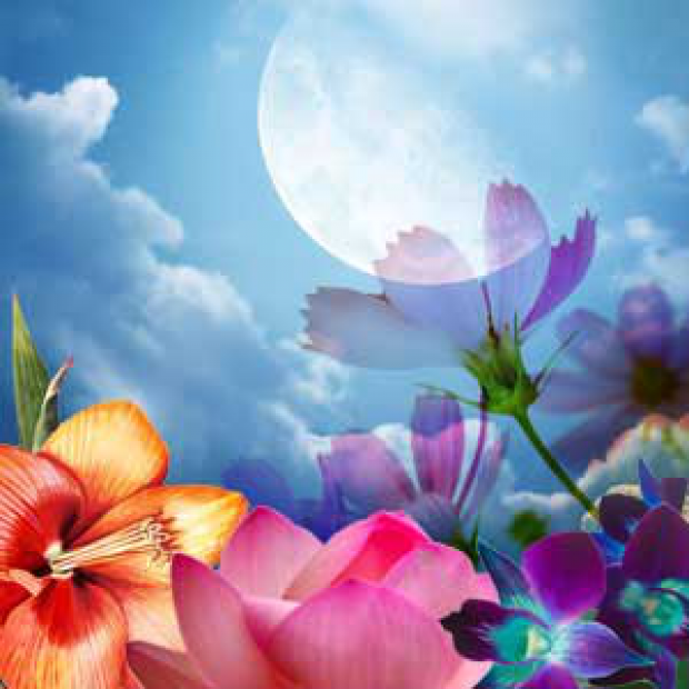 Moon Flower Fragrance Oil  for making candles, soaps, creams, lotions, tonics and other cosmetics