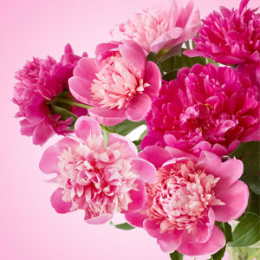 Powdery Peony Fragrance Oil