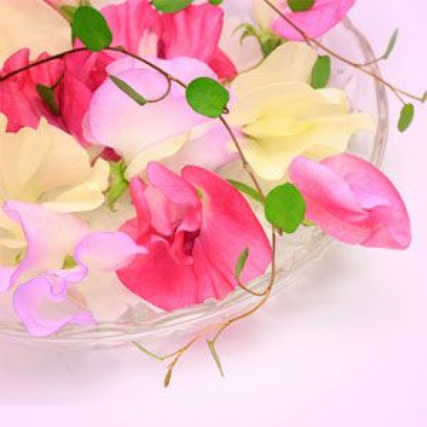 Sweet Pea for making candles, soaps, creams, lotions, tonics and other cosmetics