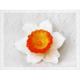 Big Daffodil