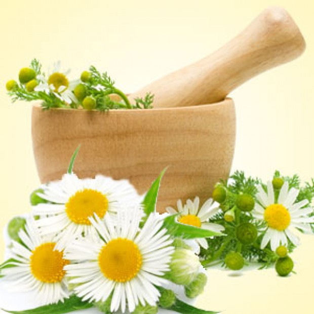 Chamomile for making candles, soaps, creams, lotions, tonics and other cosmetics