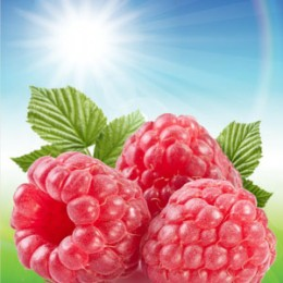 SUN RIPENED RASPBERRY