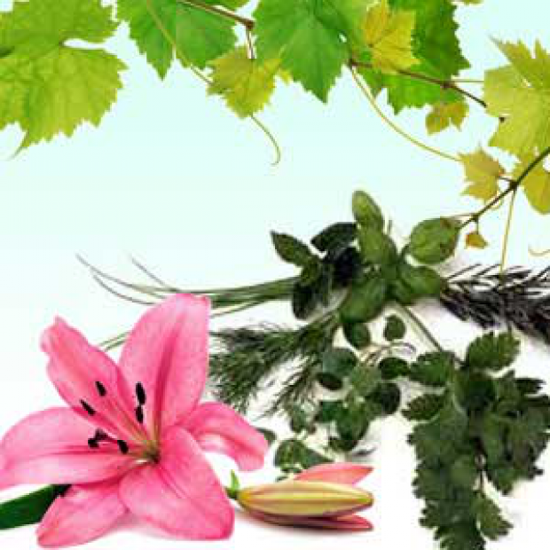Sweet Patchouli 30 ml for making candles, soaps, creams, lotions, tonics and other cosmetics