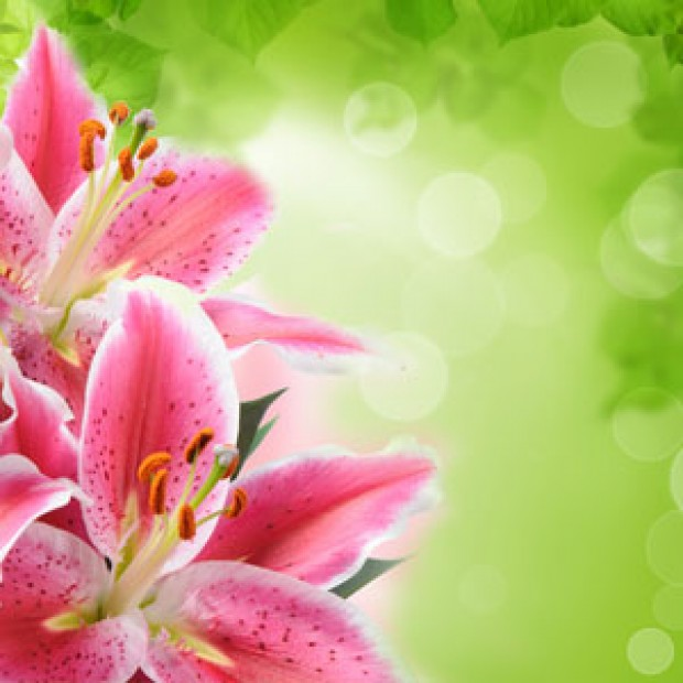 Tiger Lily for making candles, soaps, creams, lotions, tonics and other cosmetics